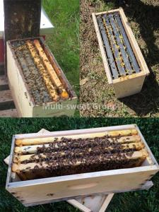 Quality Nuc Beehive 14.5kg Beekeeping Wooden House 5 Frame Nuc Box wholesale